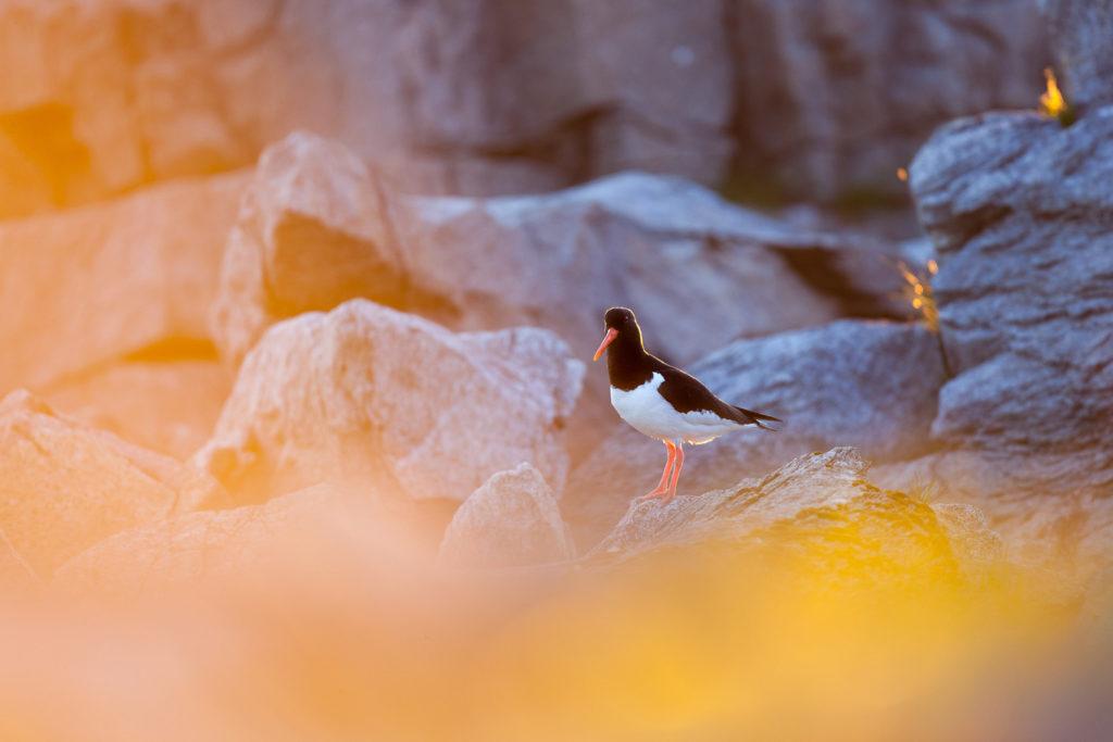 Un oeil sur la Nature | NORVÈGE – Soleil de minuit et îles arctiques