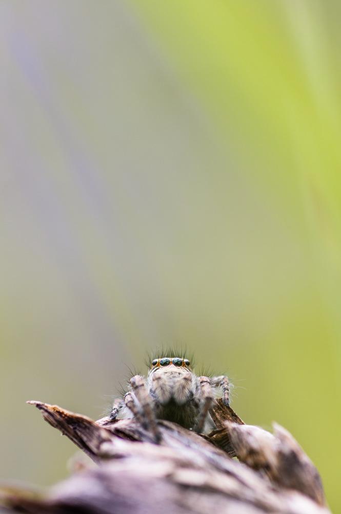 Un oeil sur la Nature | FRANCE – Orchidées sauvages