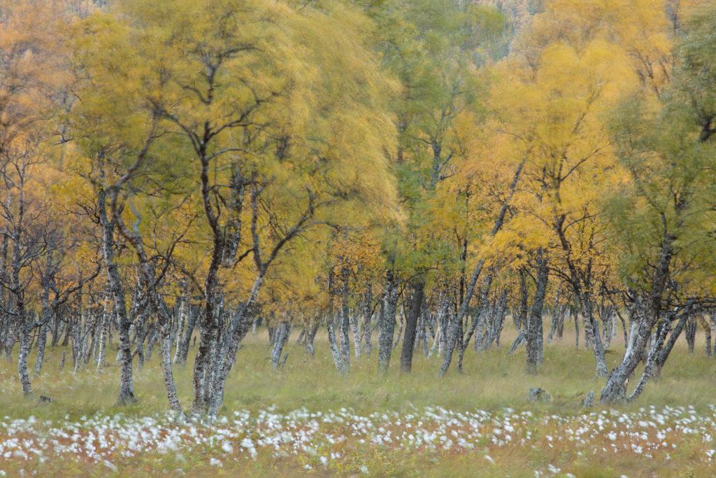 Un oeil sur la Nature | NORVÈGE – Automne polaire en Laponie