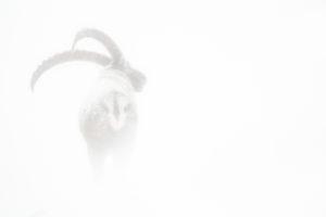 Ombre et brume dans l'hiver glacé d'un stage