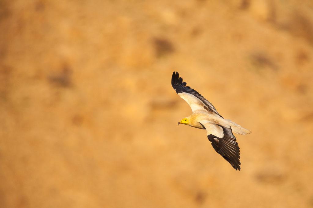 Un oeil sur la Nature | OMAN – Nature et déserts d'Arabie