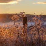 lever de soleil en Aubrac, matin de givre