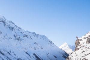 Le roi de la montagne, le bouquetin des Alpes