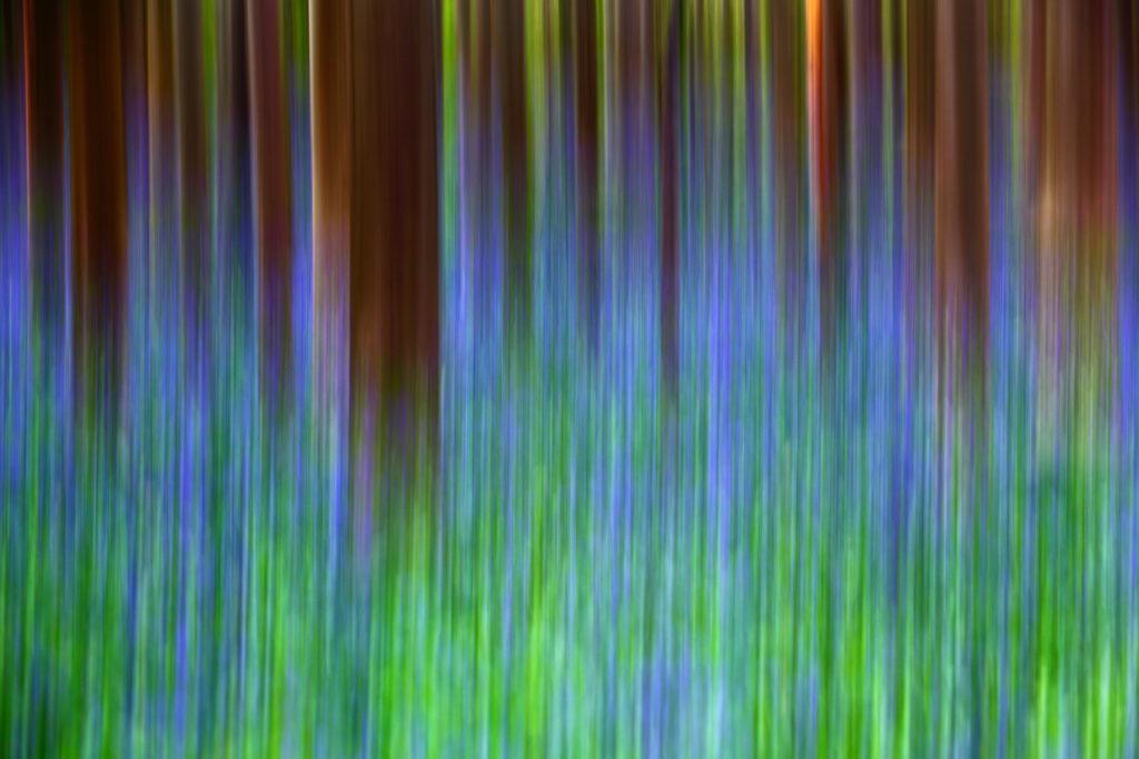 Un oeil sur la Nature | BELGIQUE – Hallerbos – Bois de Hal