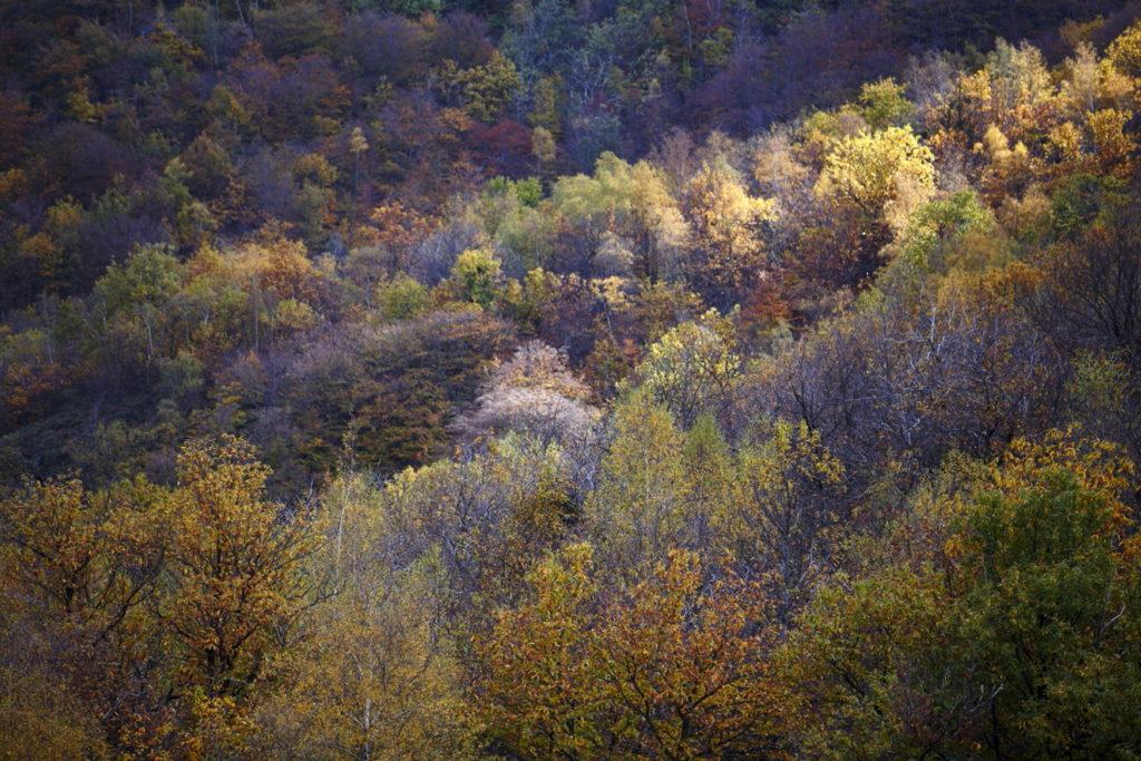 Un oeil sur la Nature | POLOGNE – Un automne dans les Carpates