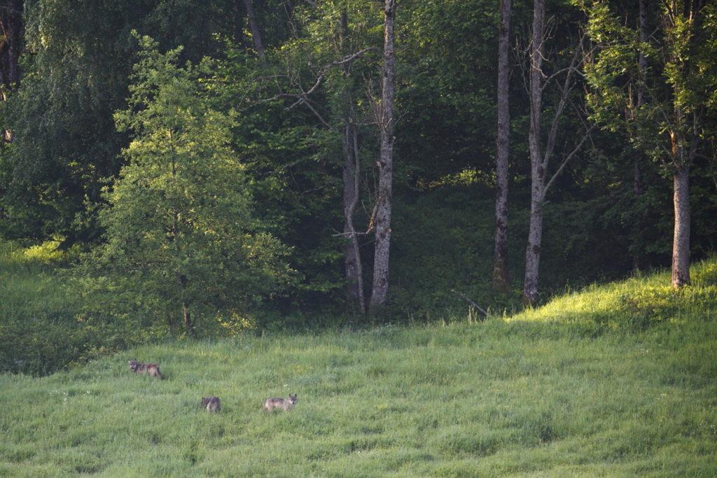 Un oeil sur la Nature | POLOGNE – Mythiques Carpates