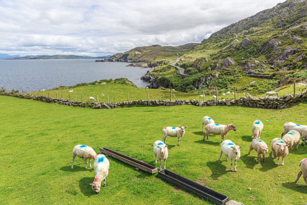Un oeil sur la Nature | IRLANDE – Couleurs du Kerry