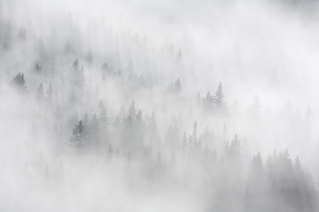 Un oeil sur la Nature | FRANCE – Bauges secrètes en hiver