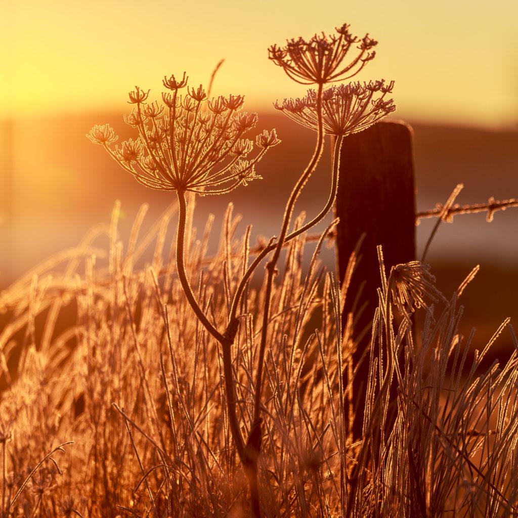 Un oeil sur la Nature | FRANCE – L'Aubrac en automne
