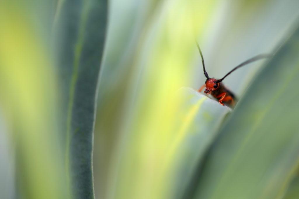 Un oeil sur la Nature   FRANCE – 100m²
