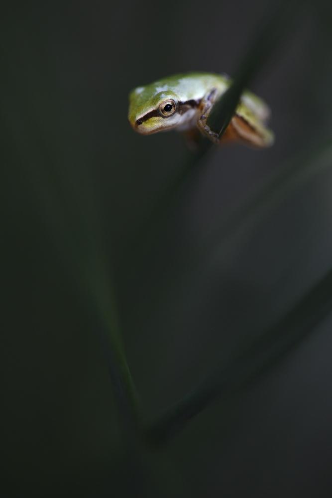 Un oeil sur la Nature | FRANCE – Amphibiens nocturnes