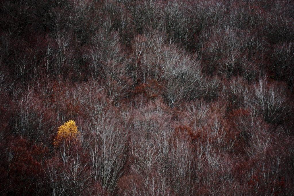 Un oeil sur la Nature | FRANCE – Ambiances automnales en Cévennes