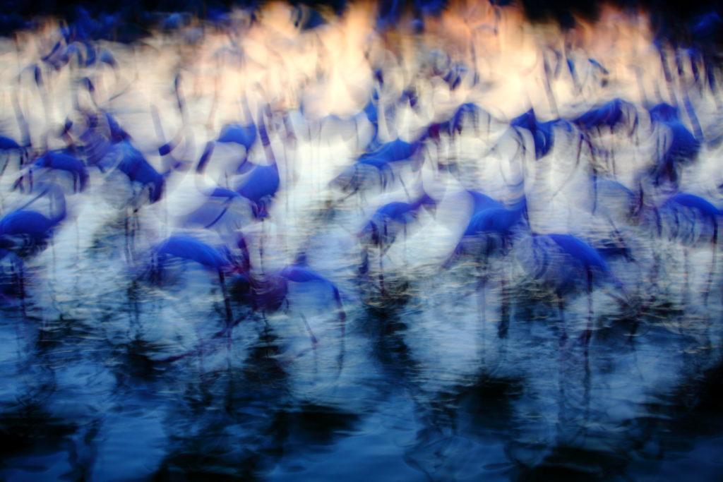 Un oeil sur la Nature | FRANCE – La parade du flamant rose
