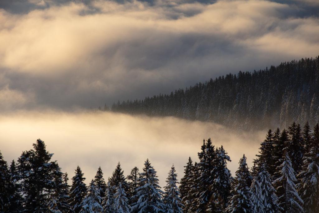 Un oeil sur la Nature   FRANCE – Bauges secrètes en hiver