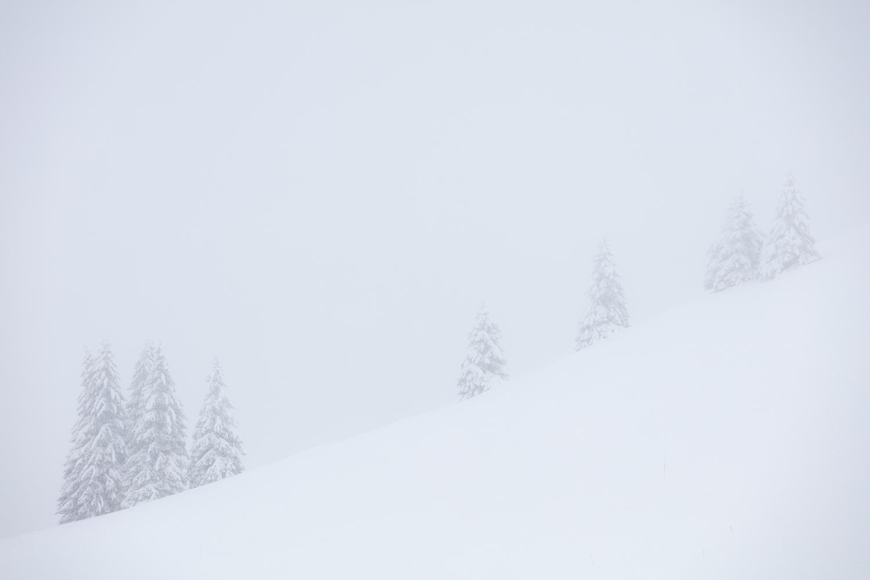 graphisme des sapins dans le brouillard, en stage photo dans les Bauges
