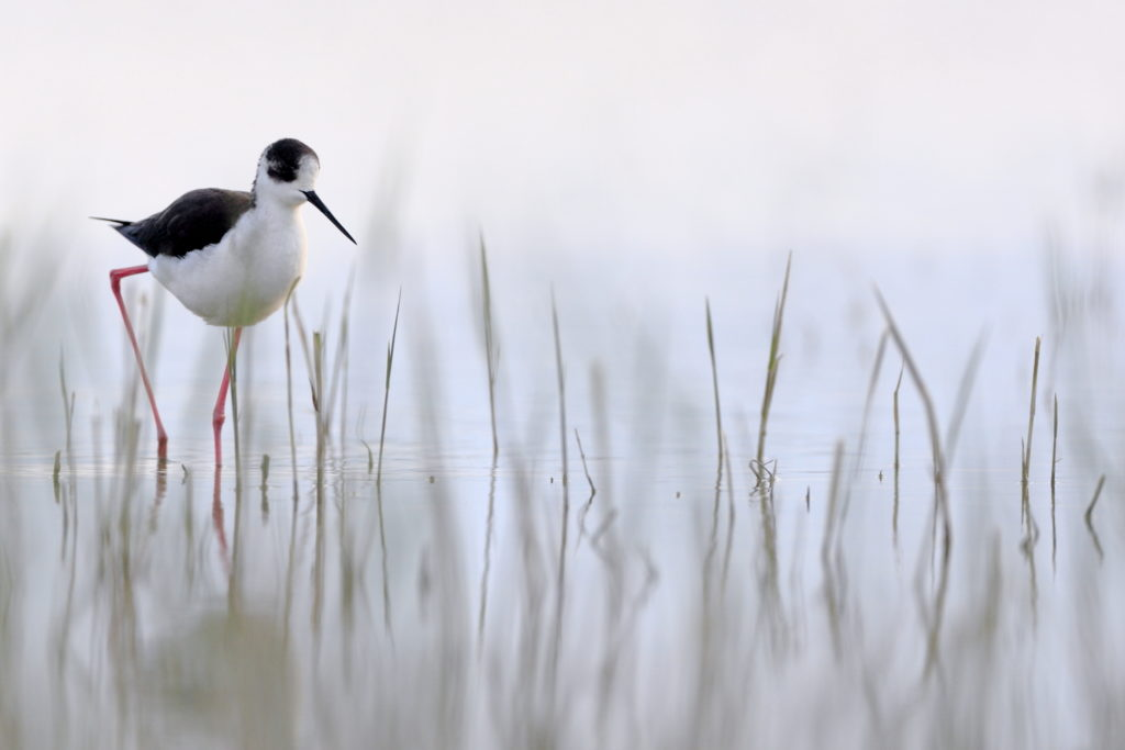 Un oeil sur la Nature | FRANCE – Oiseaux méditerranéens