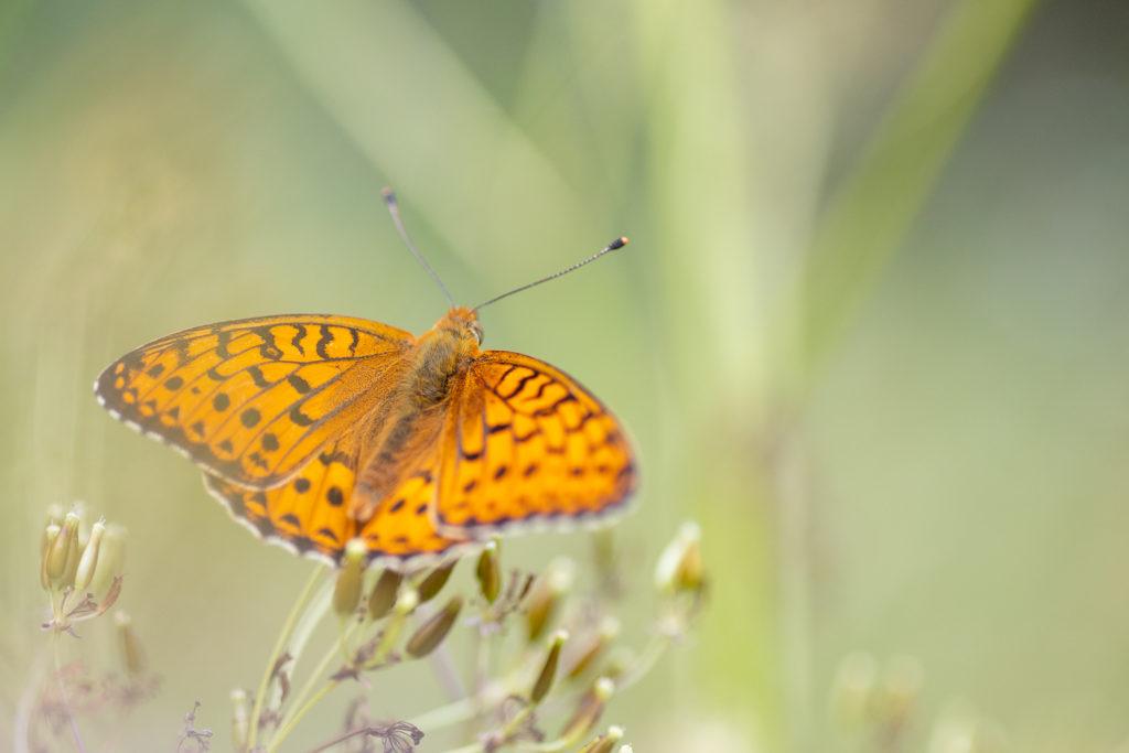 Un oeil sur la Nature | FRANCE – Papillons et fleurs de montagne