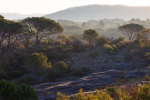 paysage de la Plaine des Maures, dans le Var