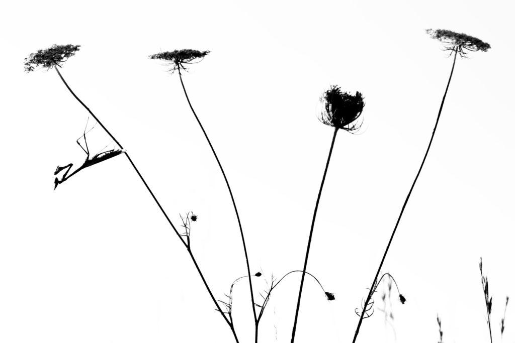 Un oeil sur la Nature | FRANCE – Macrophotographie